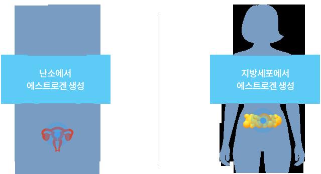 난소에서 에스트로겐 생성, 지방세포에서 에스트로겐 생성